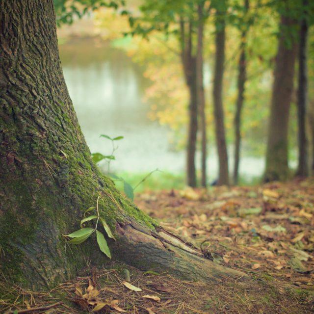 Natuur en groen